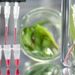 Amsbio's MagSi-DNA Vegetal kit is a two-stage process for genomic DNA extraction from plants